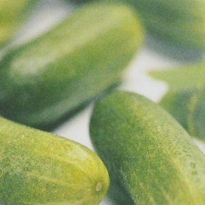 Concombre muncher bio