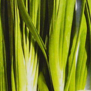 Ciboulette ail bio