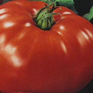 Tomate Beefsteak bio