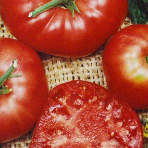 Tomate Brandywine bio