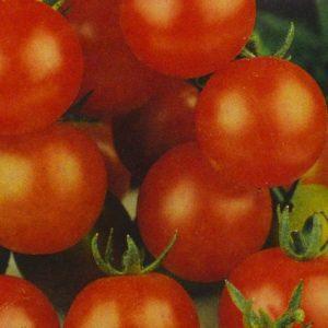 Tomates Sweet bio