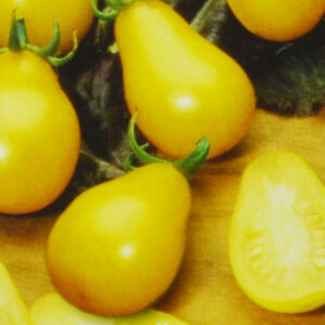 Tomates Yellow Pearshaped bio